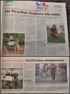 article canicross janvier 2021